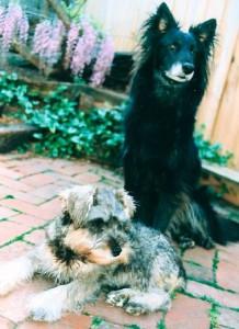 Max and Oscar