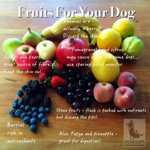 Fruits to consider for supplementing your dog's meal