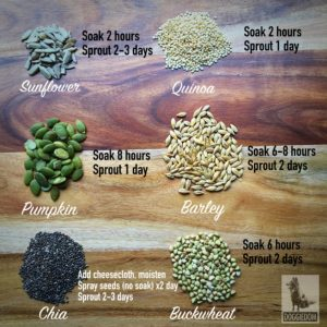sprout seeds